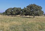 Turkey Ridge land for sale (2)
