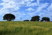 Turkey Ridge land for sale (3)