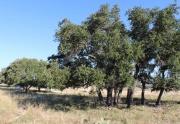Turkey Ridge land for sale (7)