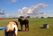 Rios Horse