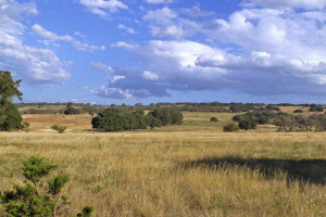 40 acre ranch land for sale best deal in Fredericksburg