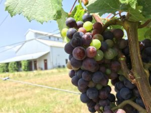 Winery Vineyard for sale Fredericksburg TX Location Map