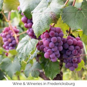 Wine & Wineries in Fredericksburg