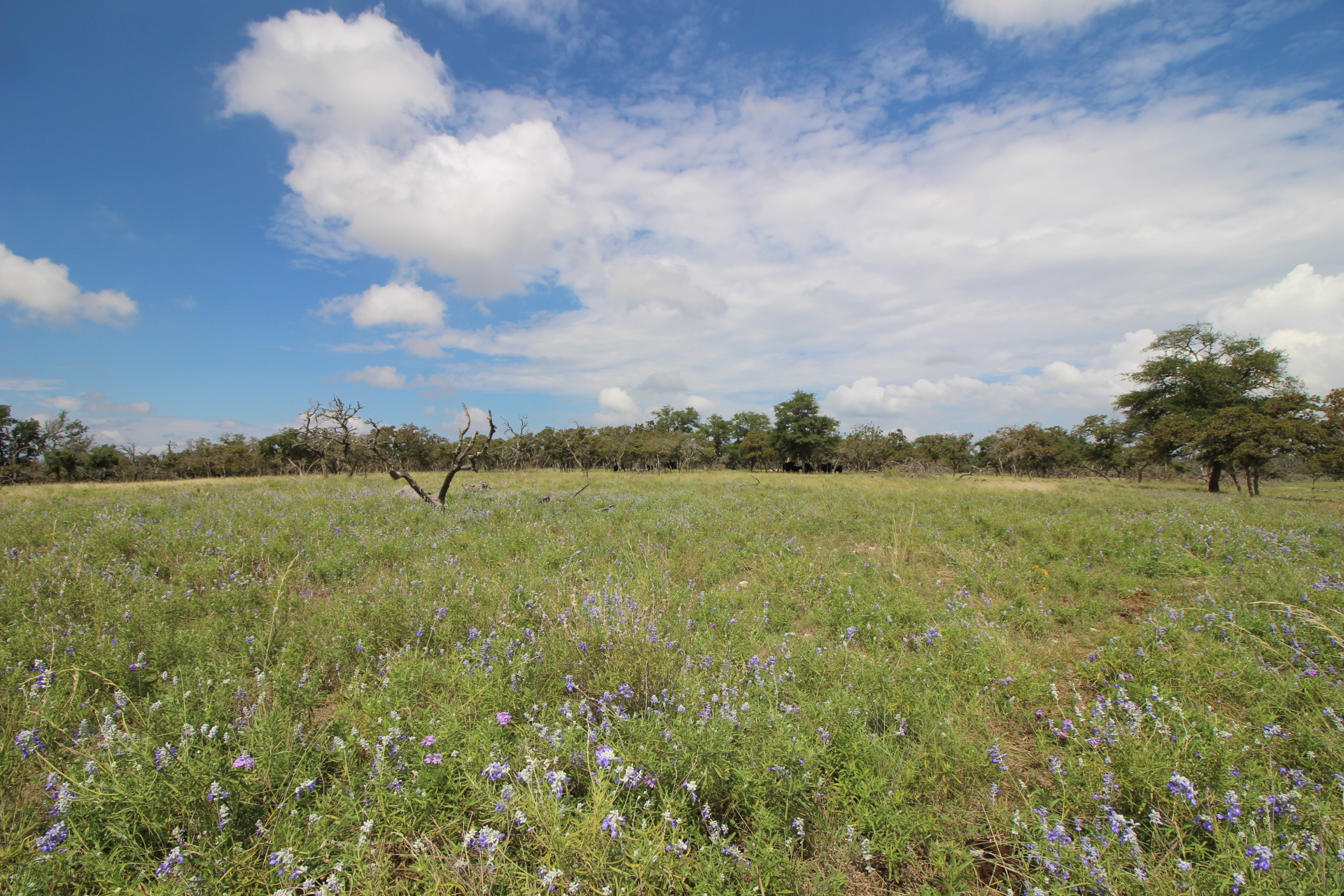 2967 Jung Rd Harper TX Land For Sale